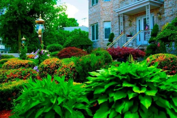 greenery and flowers in front yard