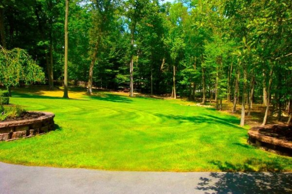 landscaped yard with paver island